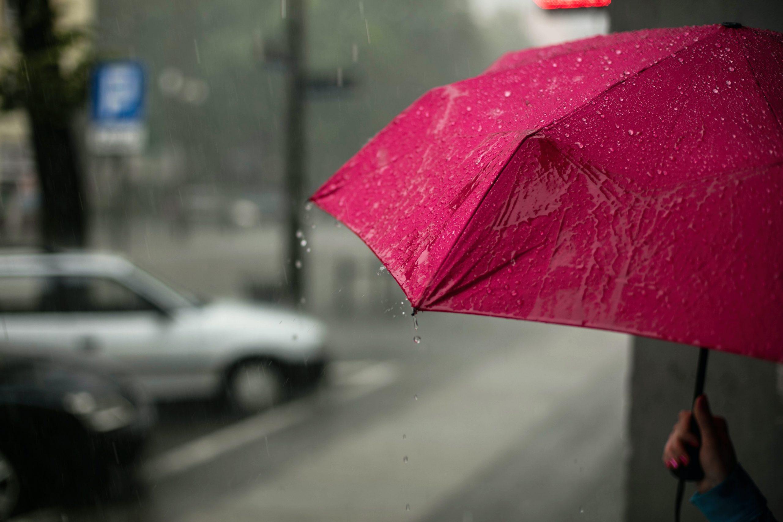Viral Next: El paraguas de la autoridad de los padres