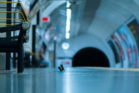 Fotografía y fe: Pelea en la estación